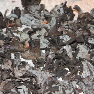 die schwammerlhex von gro armschlag wie sie pilze sammeln und berleben da hog 39 n. Black Bedroom Furniture Sets. Home Design Ideas