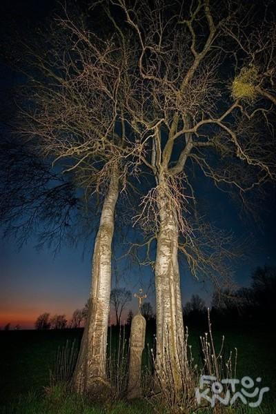 KdW_zwei Bäume