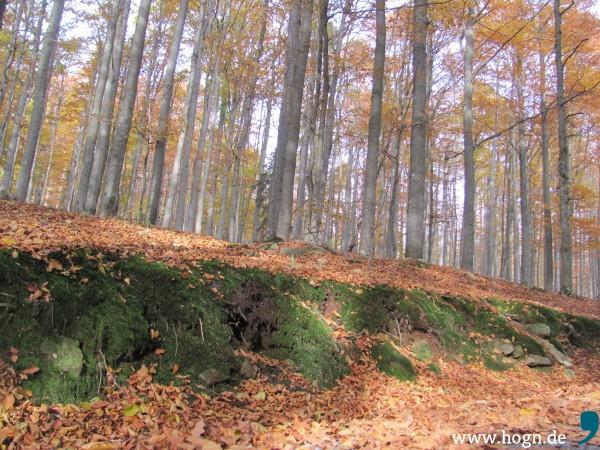 Der Wald hat sich von allein wieder erholt.