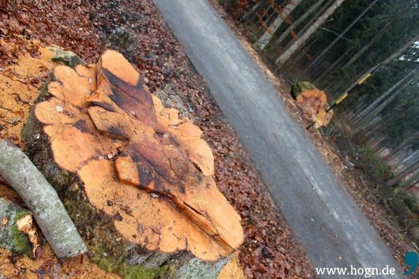 Baum Schmeijz (1)
