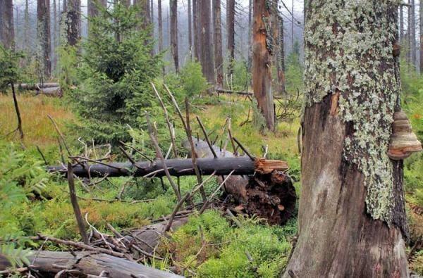 Pro Nationalpark Bayerischer Wald e.V.