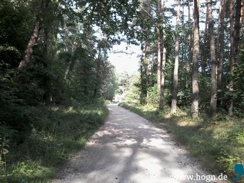 Hier findet Schorschs Showdown statt: In einem Wald bei Offenstetten, nahe Abendberg.