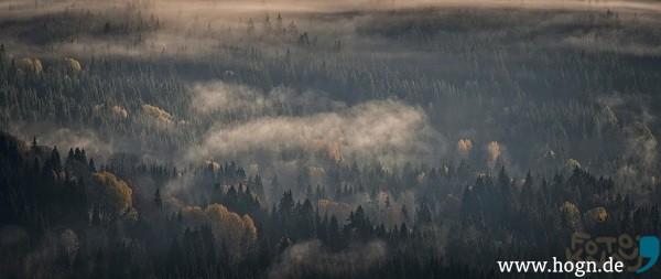 kdw_herbstnebelwald im streiflicht