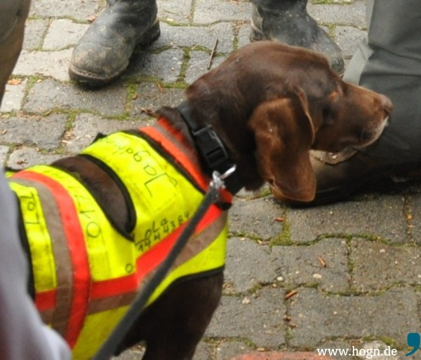 Jagdhund_Untergriesbach (1)