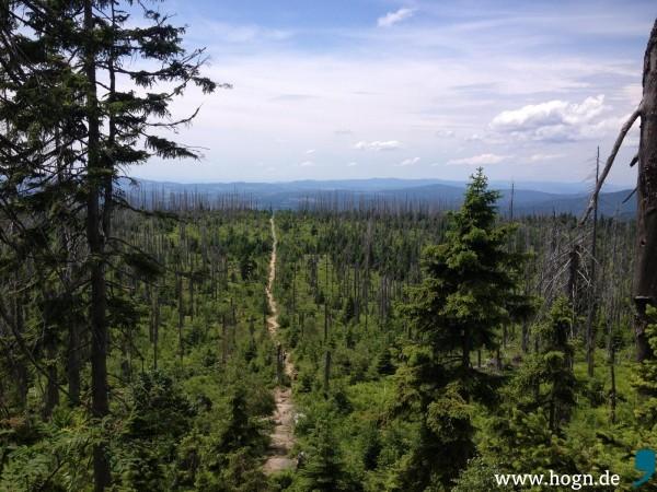 Jens Schlueter_Nationalpark-Wald (2)