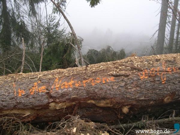 In die Naturzone werfen_Gfällei_2011-11-26