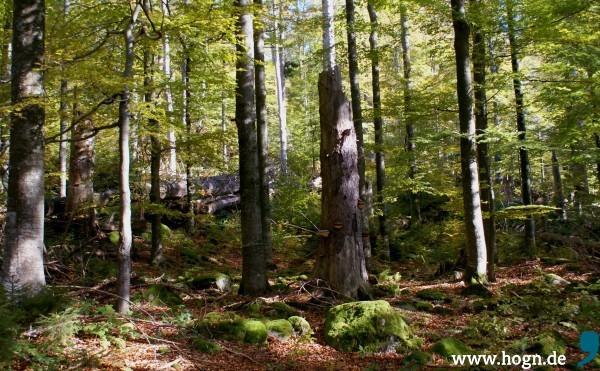 Naturzone_Bergmischwald_Fuß_Rachel-600x371