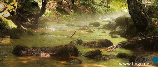 kdw_nebelfluss_sagwasser