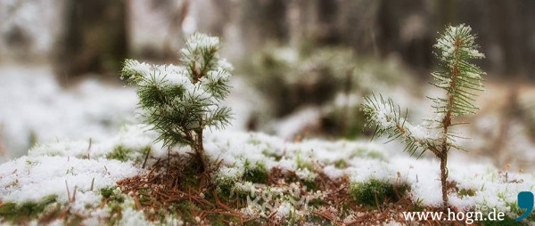 kdw_winter_wald_bäumchen