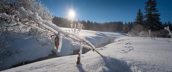 kdw_winter_schnee