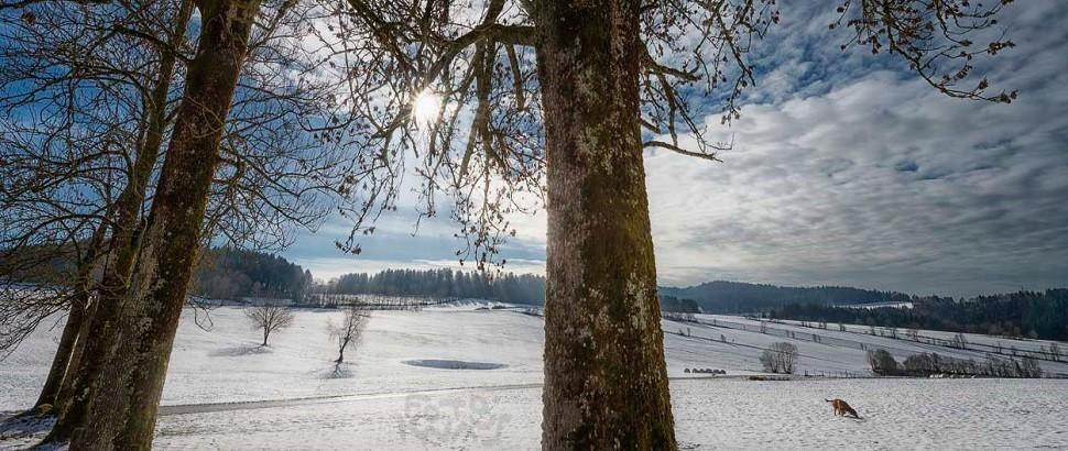 _kdw_winter_
