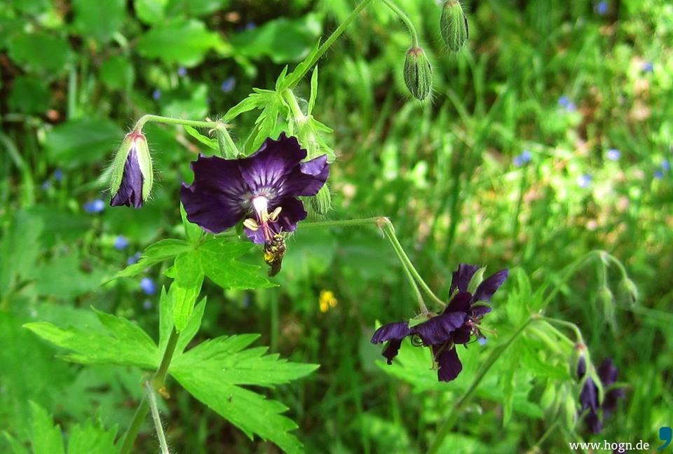 Manche Glauben: Natur Und Garten Sind Ein Widerspruch